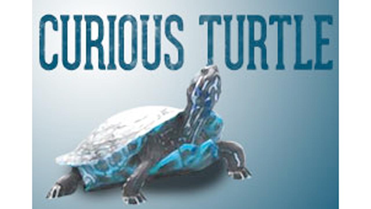 curious turtle generic