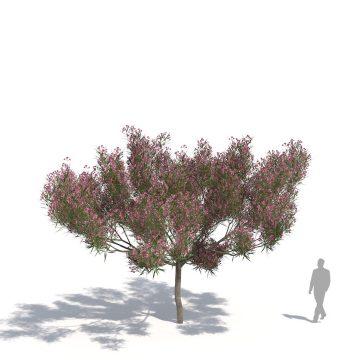 laubwerk plants kit 14 olive