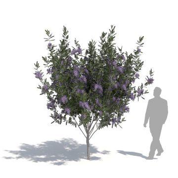 laubwerk plants kit 14 laurel