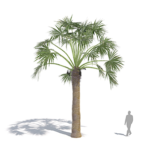 laubwerk_plantskit15_fan palm