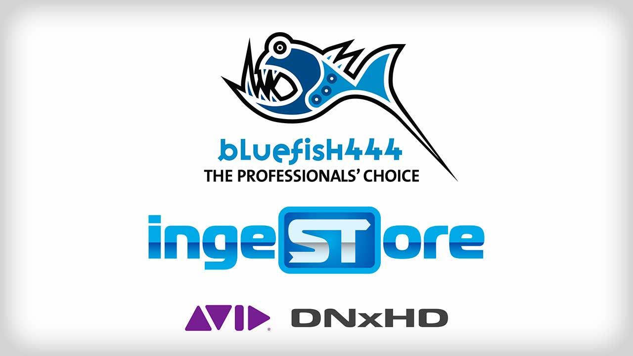 Bluefish444 Ingestore