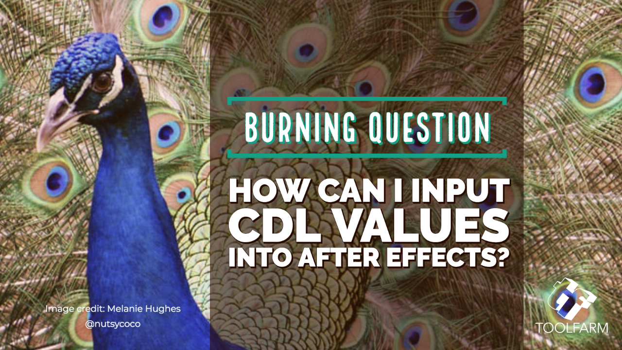Burning Question CDL Image credit: Melanie Hughes @nutsycoco
