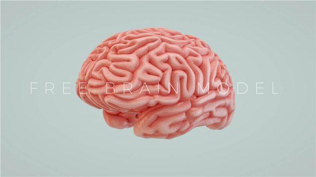 Cinema 4D 3D Brain Model