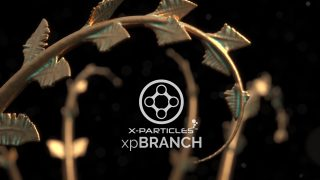 x-particles beta branch