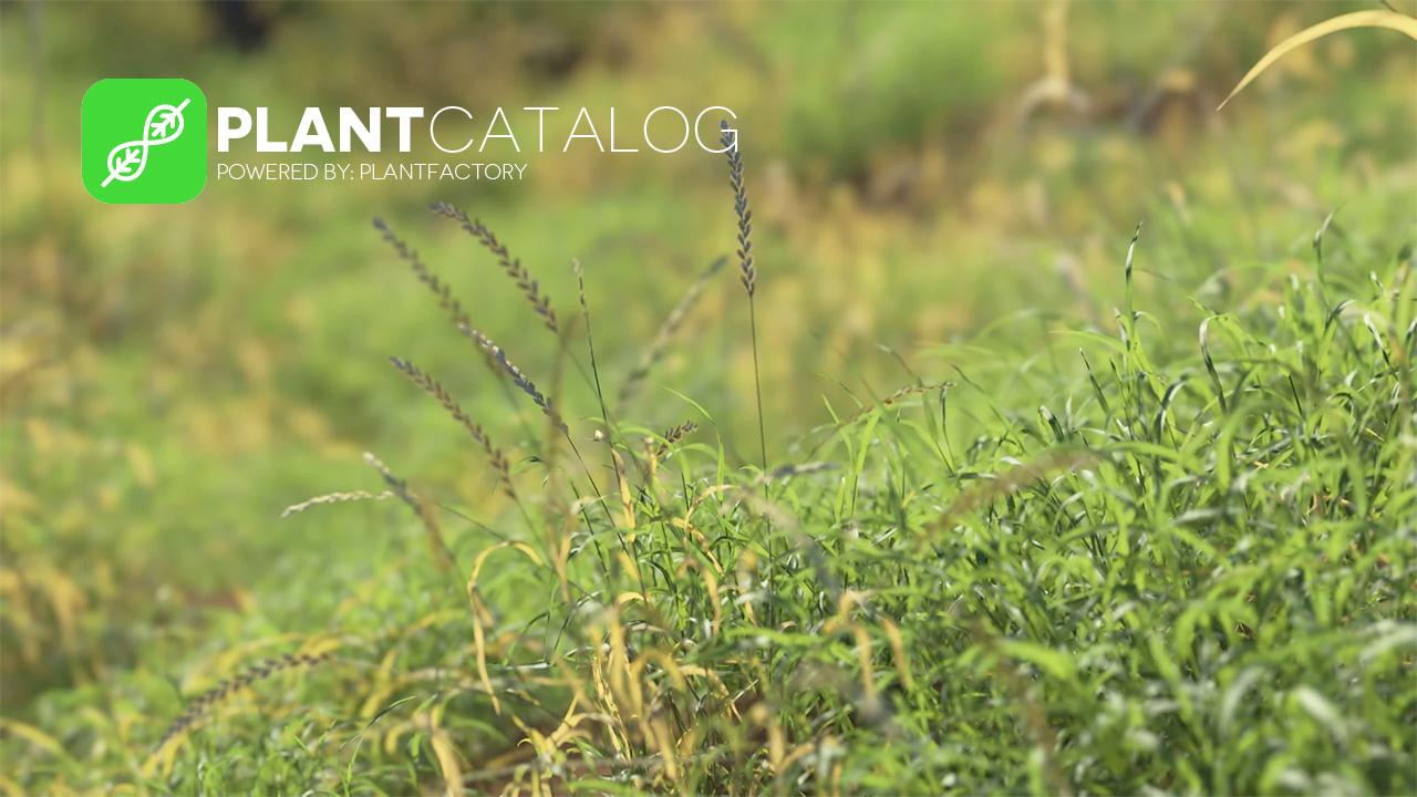 plant catalog update