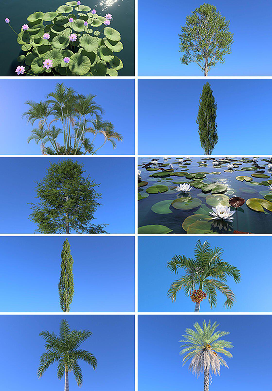 plant catalog aquatic