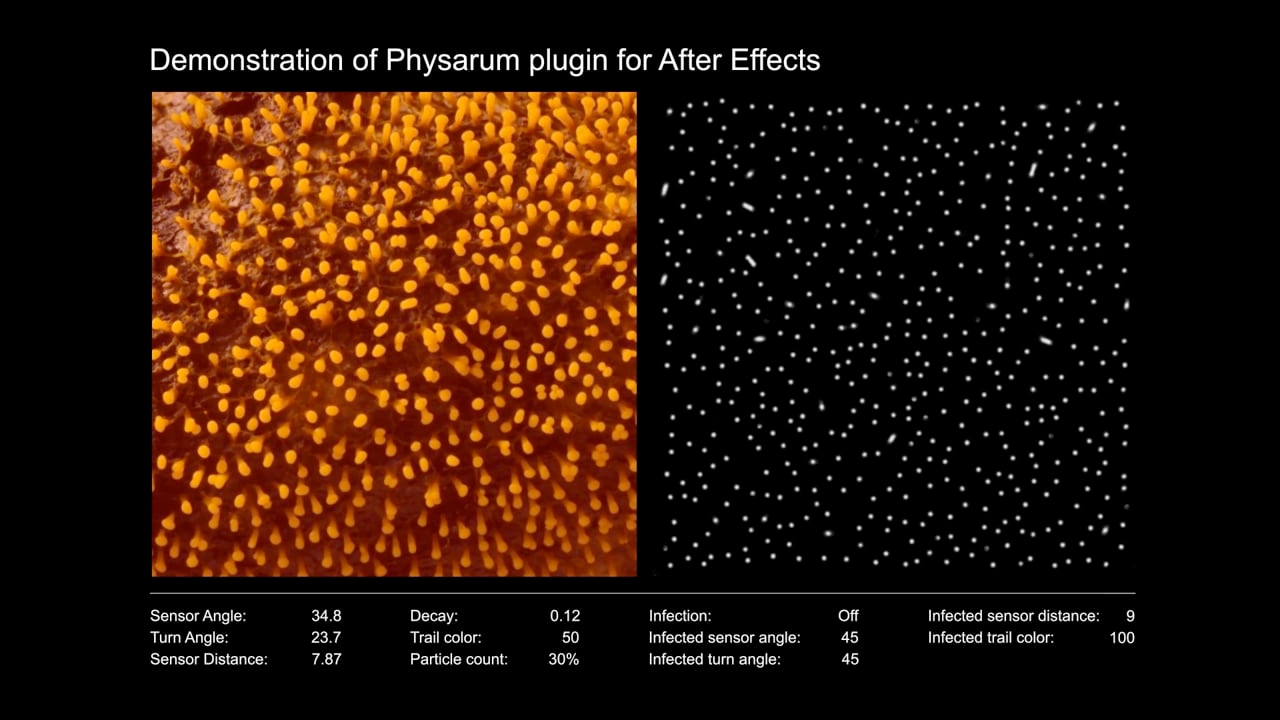 physarum tutorial